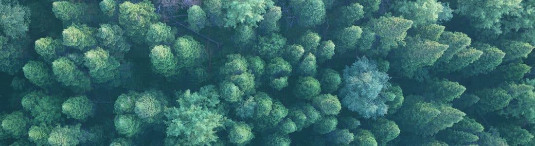 Un bosque visto en plano cenital